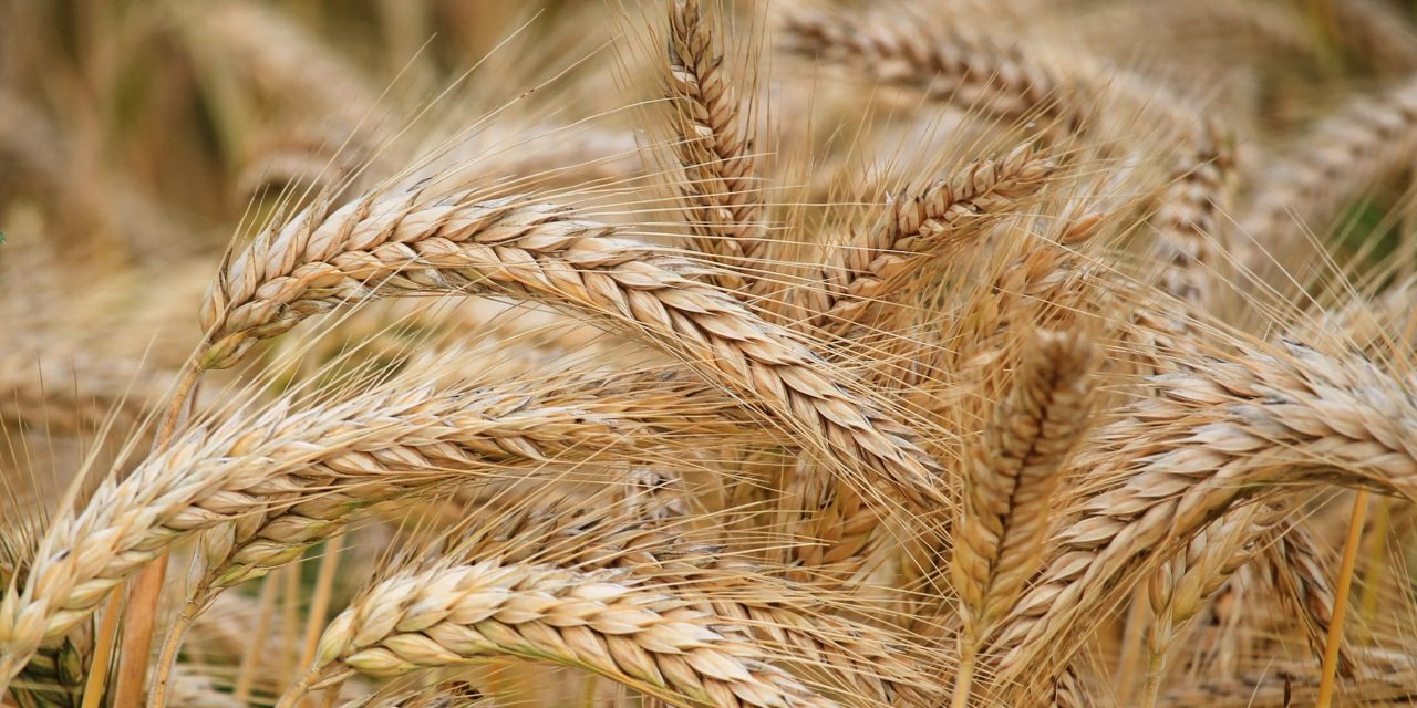 GMO: The Good, the Bad, and the Ugly