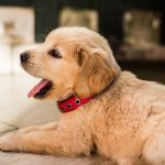 9 Simple Ways to Save on Pets and Their Care