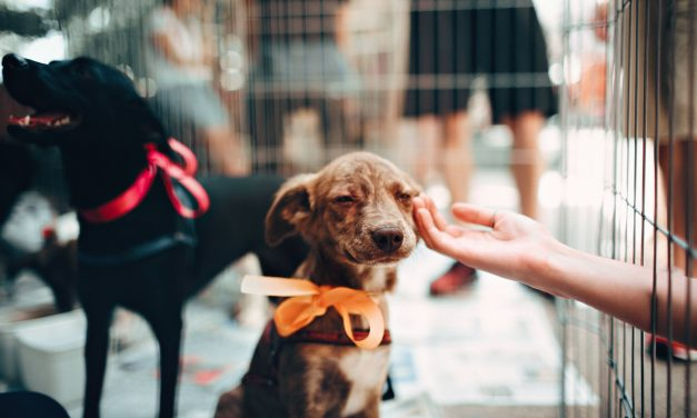 How to Help Your Local Animal Shelter